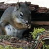 Squirrel in a Flower Box (2010)