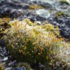 Mosses and Lichens (2012) 2/2