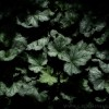 Dark Leaves (2009)